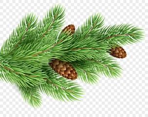 Fir tree branch realistic Christmas illustration