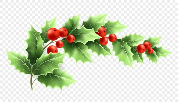 Christmas holly branch realistic illustration