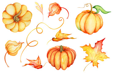 Watercolor pumpkins,  illustration isolated on the white background