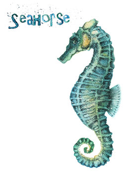 Watercolor seahorse isolated on white background