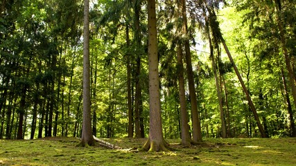 waldpanorama farbenfroh und hell