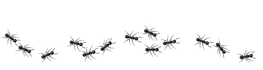 A line of worker ants marching in search of food. Vector banner