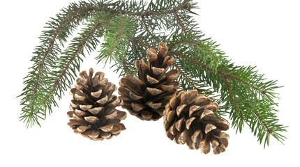 branch of Christmas tree and three cones isolated on white background