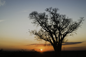 Tree silhouette at sunrise in Brazil