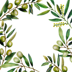 Watercolor illustration of olive branches.