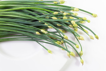 Arch of giant chive stems and flower buds isolated on white, horizontal aspect