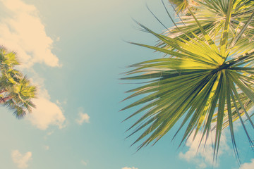 Beach with palm trees leaves and beautiful blue sky
