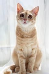 Red cat on the windowsill, pet