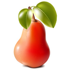 Red juicy realistic pear, close-up on a white background,