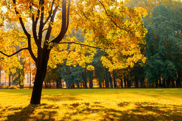 Fall landscape in sunny fall landscape park lit by sunlight. Fall park in bright sunlight