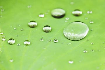 Dew drop on leaf macro close.