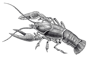 Vector High Detail Lobster Engraving