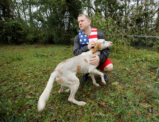 A picture and its story: Dogs rescued as floodwater rose