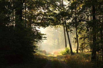 Country road through the forest during sunrise