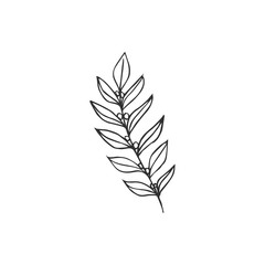 leaf isolated on white background, vector illustration