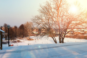Foto op Plexiglas Zalm winter forest landscape sunlight and snow
