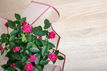 Pink rose buds close up