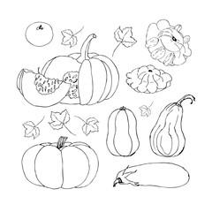 Single Sketch Pumpkin. Doodle pumpkins. Hand drawn ink illustration.