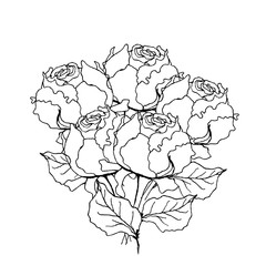 Peony rose bouquet. Liner  illustration on white background