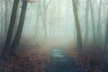 Autumn park in mysterious fog