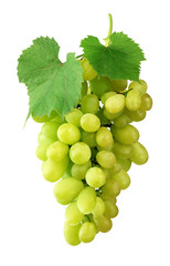 Bunch of ripe grapes with leaves, isolated on white background without shadow. Close-up. Varietal grapes. Winemaking.