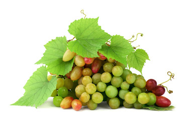Grapes with leaves and tendrils isolated.Wine-making. Selection of the best berries. Close-up.