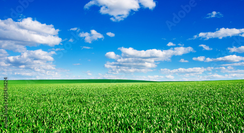 Wall mural Image of green grass field and bright blue sky