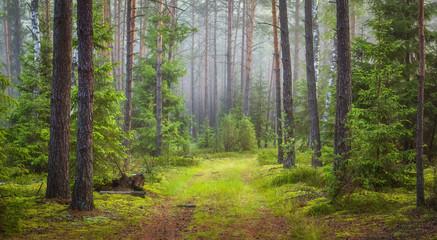 Fototapeten Wald Nature forest landscape. Green summer forest