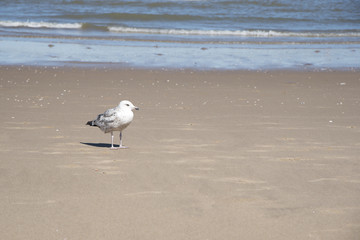 lonely seagull standing on a rough sandy beach