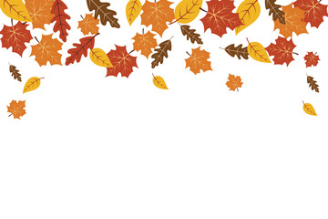 Autumn leaves maple leaf background. Autumn background vector illustration.