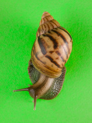 a snail in the background of green