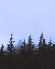 Forest at Blue Hour