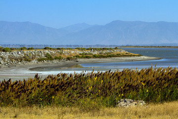 Native grasses and sunflowers in autumn on the shore of Antelope Island in the middle of the Great Salt Lake in Utah, with the Wasatch Mountains in the background
