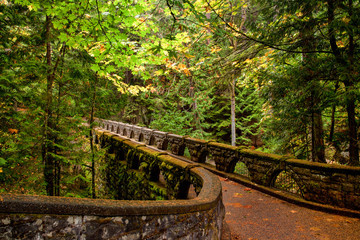 Mossy stone bridge trail through lush forest