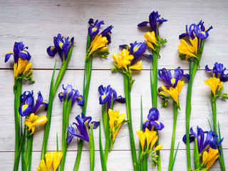 Flowers irises, crocuses light wooden background as backing, many colors, all the space occupied by flowers. Selective focus. Place for text.