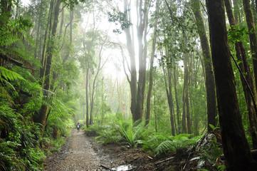 Temperate Rainforest in Tasmania