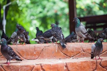 Pigeons at a public square