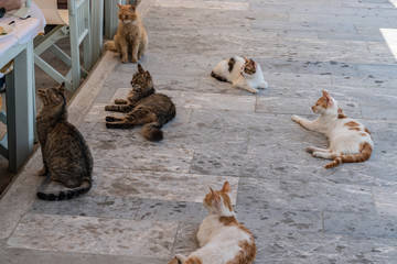 Street cats waiting for some food on the pavmente near a restaurant