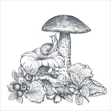 Vector composition of hand drawn forest mushrooms with fall leaves, snail, cranberry