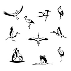 Abstract silhouette of storks. Logo for the company