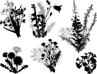 set of six wild herb bunshes silhouettes isolated on white