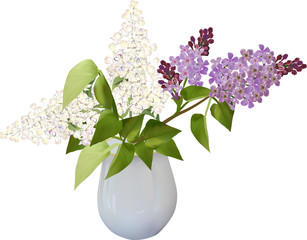 lilac flower branches in vase isolated on white