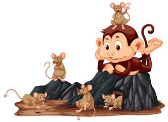 Monkey looking at rat