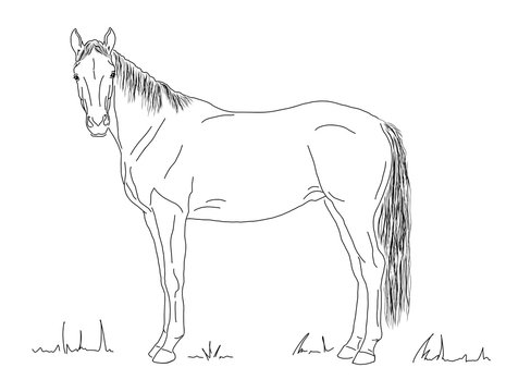 A horse stands in the meadow