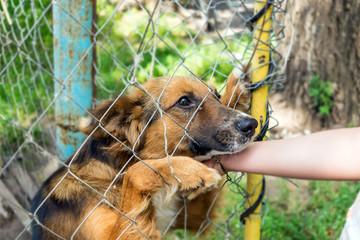 Outddor Homeless animal shelter. Sad mongrel dog happy visitor shelter. Girl choosing a dog for adoption. Girl volunteer in the nursery for dogs. Shelter for stray dogs.