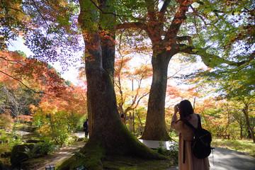 日本の紅葉を撮る