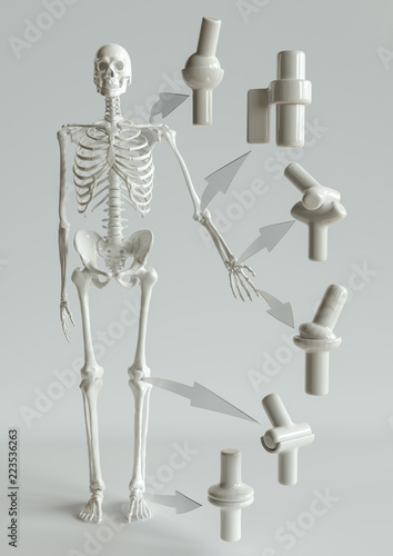 Joint Types On The Human Skeleton 3d Rendering Stock Photo And