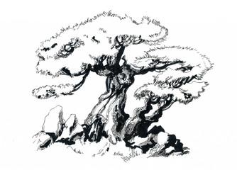 Bonsai tree, drawing.