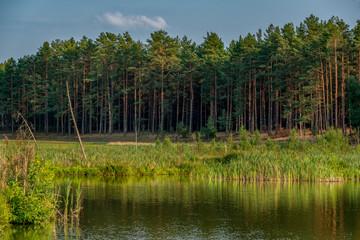 stary las nad brzegiem jeziora