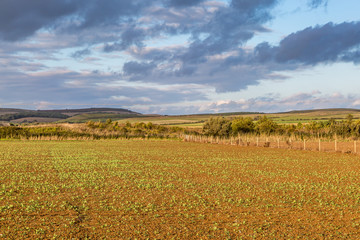 Isle of Wight rural landscape in late summer, with evening light